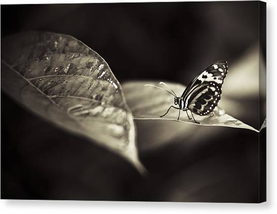 Butterfly Warm Tone Canvas Print