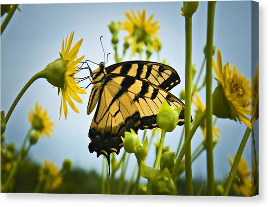 Canvas Print featuring the photograph Butterfly by Williams-Cairns Photography LLC