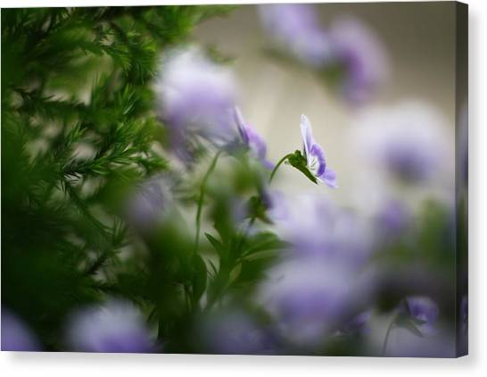 Butterfly's Dream 4 Canvas Print