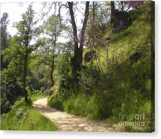 Buttermilk Trail South Yuba Canvas Print