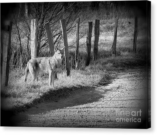 Bw Coyote Canvas Print