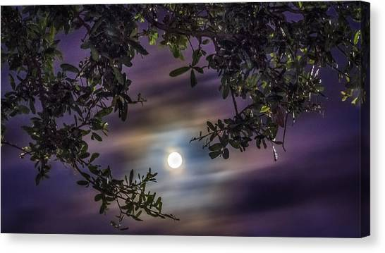 By The Moonlight Canvas Print