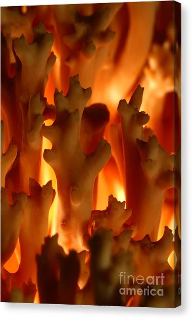 C Ribet Mushroom And Fungi Art From The Flames Canvas Print
