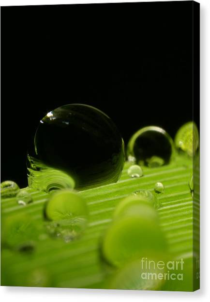 C Ribet Orbscape Water Soul Canvas Print