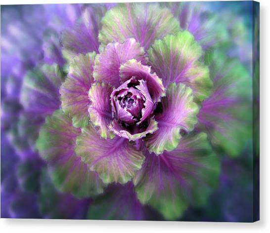 Cabbage Canvas Print - Cabbage Flower by Jessica Jenney