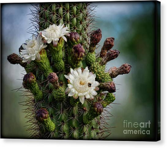 Cacti Bouquet  Canvas Print