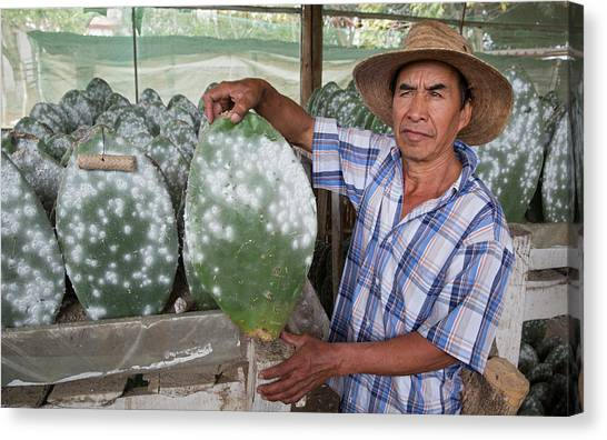Oaxaca Canvas Print - Cacti Farm For Cochineal Insects by Jim West