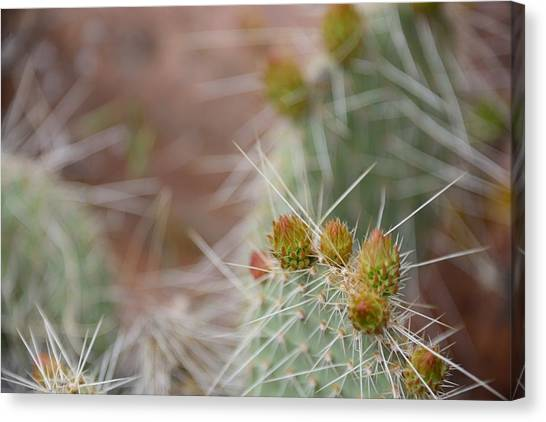 Cacti In Moab Canvas Print by Kyle Reynolds
