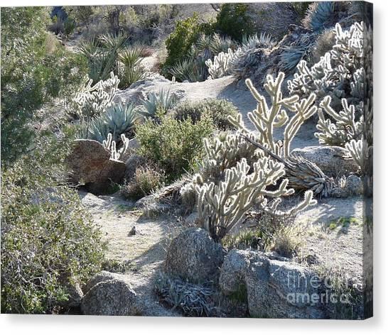 Cactus And Rocks Canvas Print by Deborah Smolinske