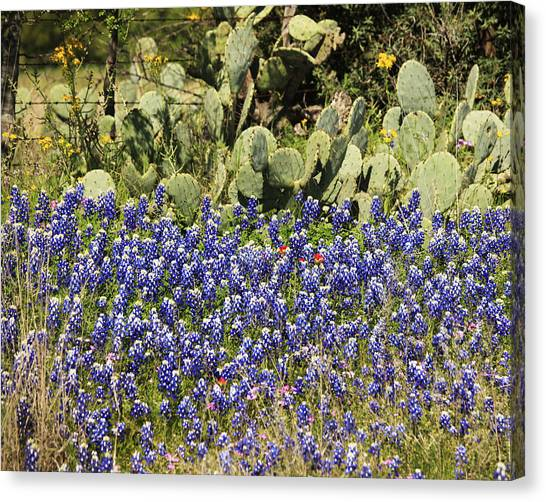 Cactus And Wild Flowers Canvas Print