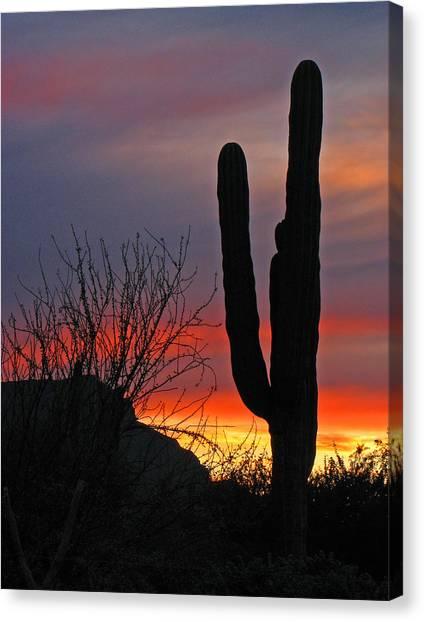 Cactus At Sunset Canvas Print