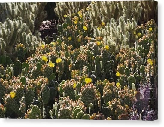 Cactus Carpet Canvas Print