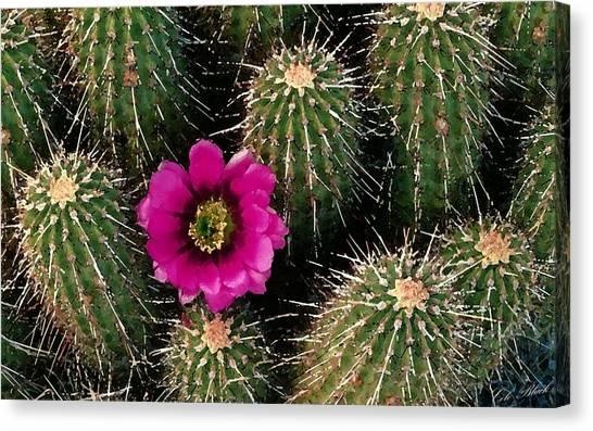 Cactus Flower Canvas Print by Cole Black