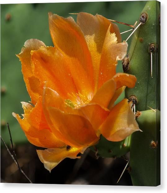 Cactus Flower In Orange Canvas Print