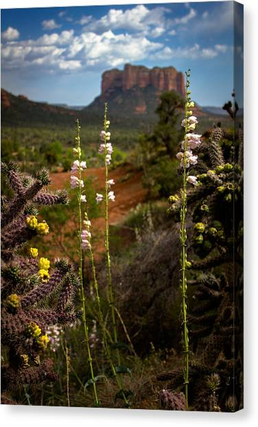 Cactus Flowers And Courthouse Bluff Canvas Print