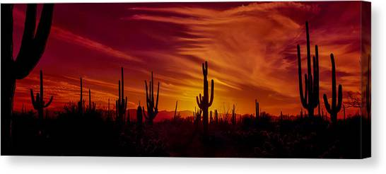 Sonoran Desert Canvas Print - Cactus Glow by Mary Jo Allen