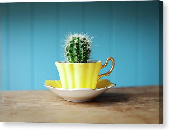 Saucer Canvas Print - Cactus Growing In Teacup On Desk by Ian Nolan