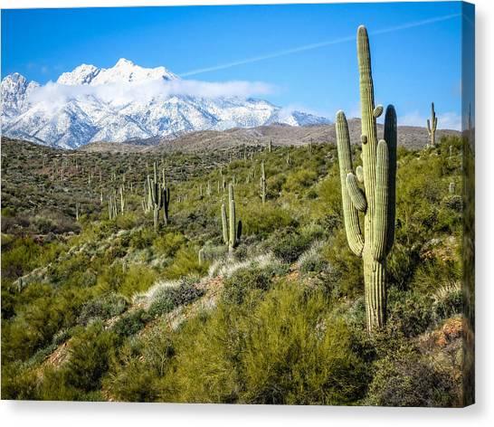 Cactus In Arizona Canvas Print