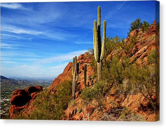 Cactus On Camelback Canvas Print