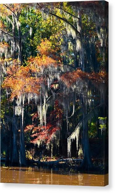 Caddo Lake 40 Canvas Print