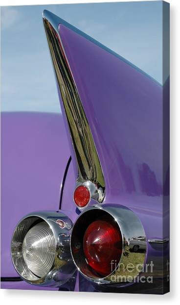 Caddy Shark Canvas Print