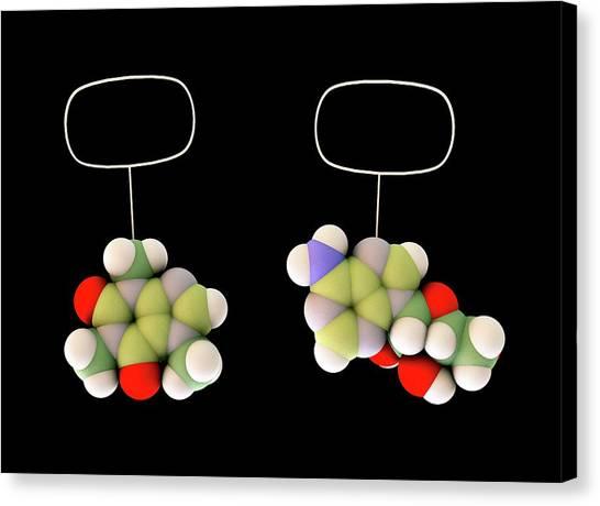 Molecular Biology Canvas Print - Caffeine And Adenosine by Sci-comm Studios