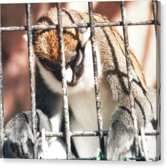 Caged But Strong Canvas Print