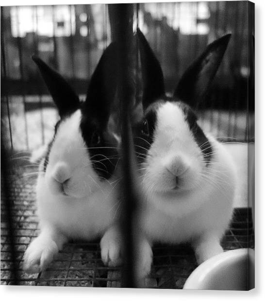 Small Mammals Canvas Print - Cages Side-by-side Made A Mirror by Heidi Hermes