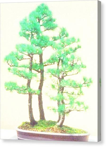 Caitlin Elm Bonsai Tree Canvas Print