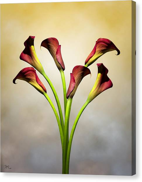 Lily Canvas Print - Cala Lily 5 by Mark Ashkenazi