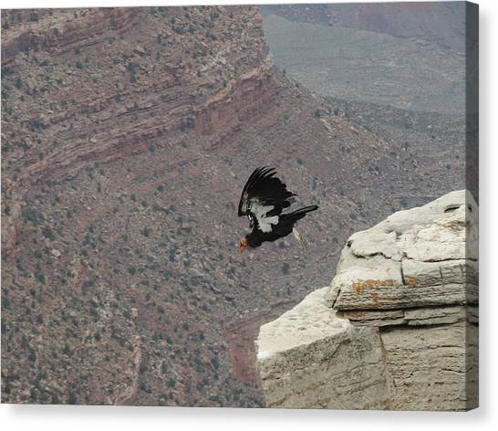 California Condor Taking Flight Canvas Print