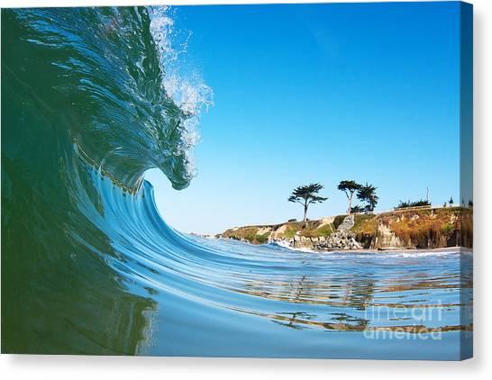 California Curl Canvas Print by Paul Topp