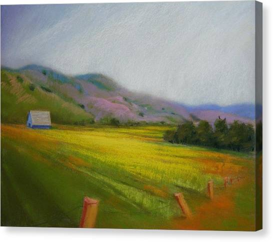 California Field In May  Canvas Print