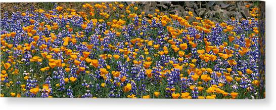 Table Mountain Canvas Print - California Golden Poppies Eschscholzia by Panoramic Images