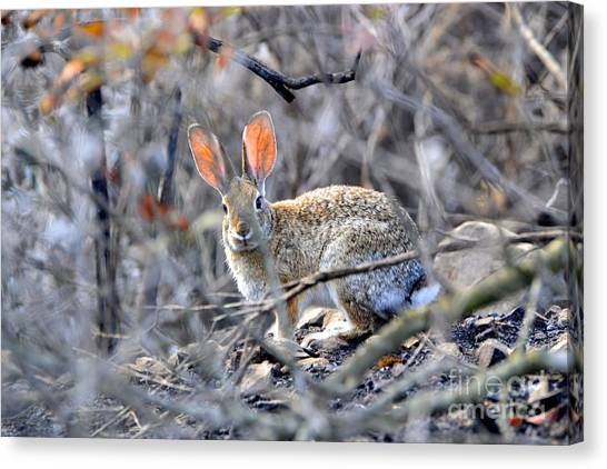 Homeless Hare Canvas Print