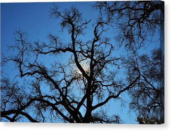 California Oak Sun Tree Canvas Print