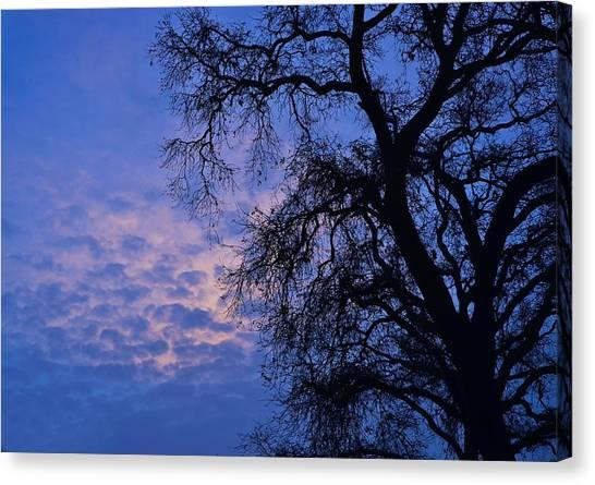 California Oak Sunrise Canvas Print
