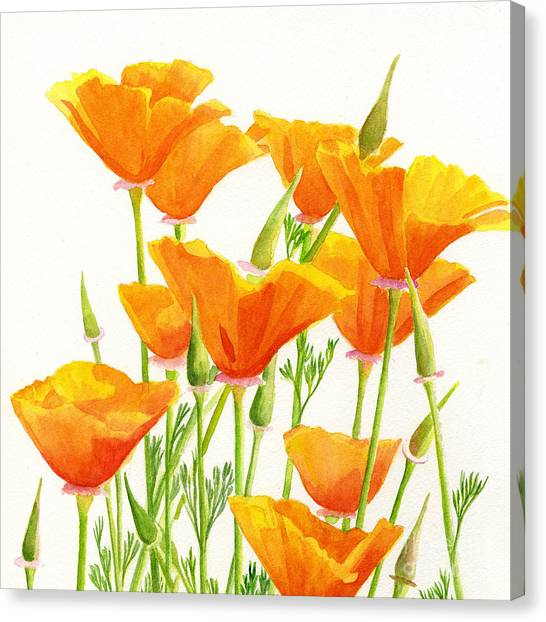 California Poppy Canvas Prints | Fine Art America