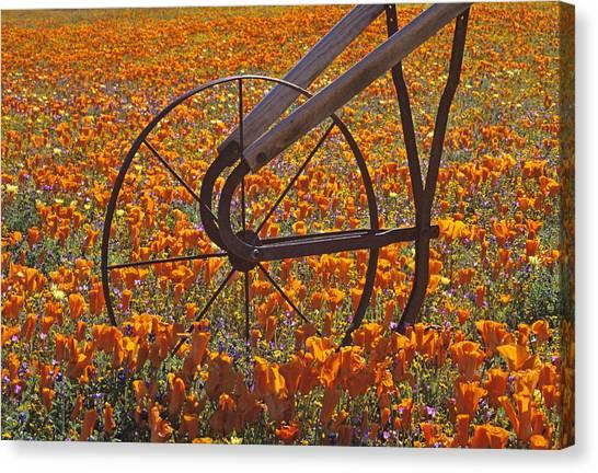 California Poppy Field Canvas Print