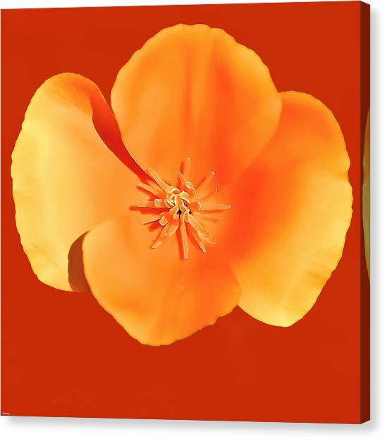 Salvation Army Canvas Print - California Poppy Painting by Bob and Nadine Johnston