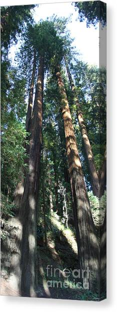 Canvas Print - California Redwood by Christiane Schulze Art And Photography