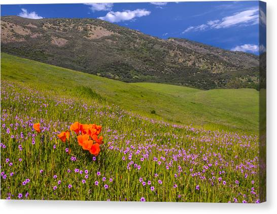 Contra Canvas Print - California Wildflowers by Marc Crumpler