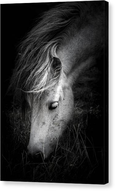 Call Me The Wind Canvas Print