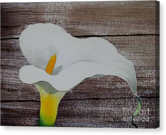 Calla In The Delta Canvas Print