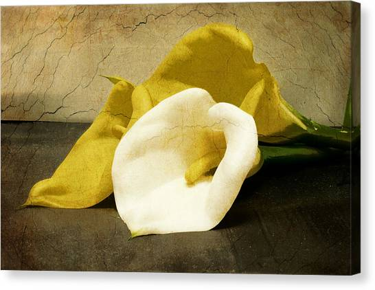 Canvas Print featuring the photograph Calla Lilies by Beverly Stapleton