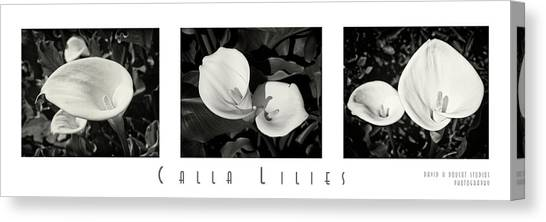 Calla Lilies Horizontal With Title And Nameplate Canvas Print