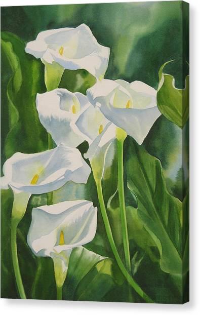 Calla Lily Canvas Print - Calla Lilies by Sharon Freeman