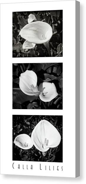 Calla Lilies Vertical With Title Canvas Print