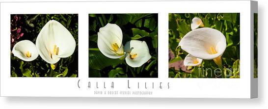 Calla Lilly Color Triptych Canvas Print