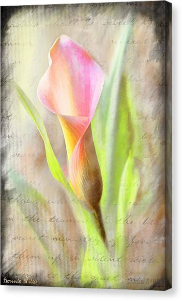 Calla Lily In Pink Canvas Print